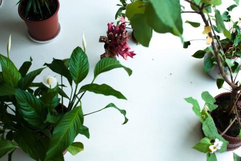 plantsattheoffice