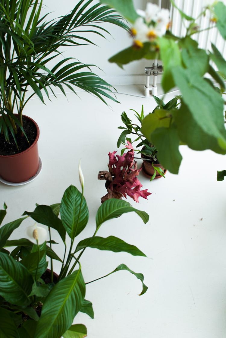 plants at the office2